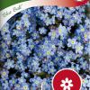 Myosotis sylvatica 'Blue Ball'-thumbnail