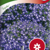Lobelia erinus Pendula 'Saphir'-thumbnail