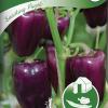 Snacking Purple-thumbnail