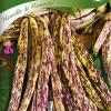 Bean 'Merveille de Piemonte'-thumbnail