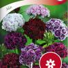 Dianthus barbatus 'Mix'-thumbnail