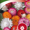 Xerochrysum bracteatum-thumbnail
