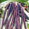 Bean 'Purple Queen'-thumbnail