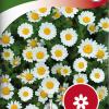 Mauranthemum-thumbnail