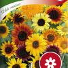 Sunflower 'Wilde mixture'-thumbnail