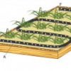 Porous Pipe irrigation system for planting-thumbnail