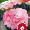 Pelargonium 'Inspire Pink F1'-thumbnail