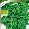 Spinach 'Monnopa'-thumbnail