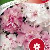 Petunia 'Cascade Orchid Mist F1'-thumbnail