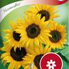 Sunflower 'Moonwalker'-thumbnail