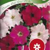 Petunia 'Dreams Wild Rose F1'-thumbnail