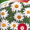 Ox-eye daisy 'Maikönigin'-thumbnail