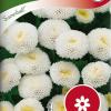 Tanacetum parthenium 'Snowball'-thumbnail