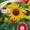Sunflower 'Golden Hedge'-thumbnail