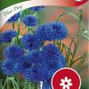 Cornflower 'Blue Boy'-thumbnail