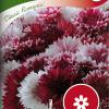 Cornflower 'Classic Romantic'-thumbnail