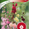 Alcea rosea 'Chaters Double'-thumbnail