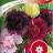 Alcea rosea 'Summer Carnival'-thumbnail