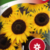 Sunflower 'Ikarus'-thumbnail