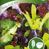 Salaatti 'Baby Leaf mix'-thumbnail