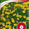 Tagetes tenuifolia 'Lemon Star'-thumbnail