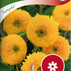 Sunflower 'Sungold'-thumbnail