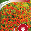 Tagetes tenuifolia 'Tangerine Gem'-thumbnail