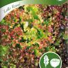 Lettuce 'Lollo Rossa'-thumbnail