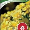 Tagetes erecta 'Alumia Vanilla Cream'-thumbnail