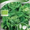 Lettuce 'Matilda'-thumbnail