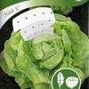 Lettuce 'Hilde II'-thumbnail
