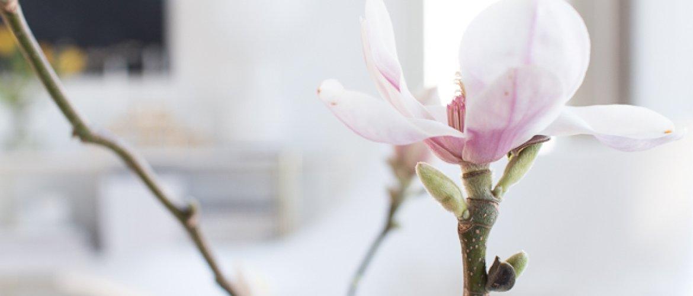 Keväiset oksat-thumbnail