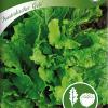 Lehtisalaatti 'Australicher Gele'-thumbnail