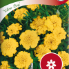 Tagetes erecta 'Yellow Boy'-thumbnail