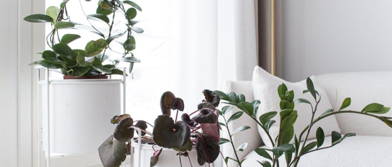 Vanhanajan huonekasvit-thumbnail