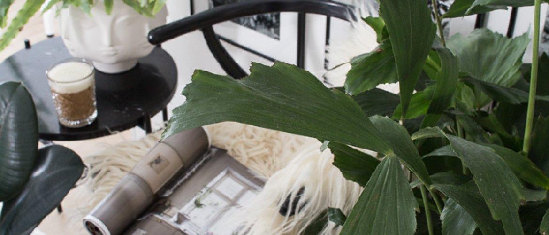 Huoneilmaa puhdistavat viherkasvit-thumbnail