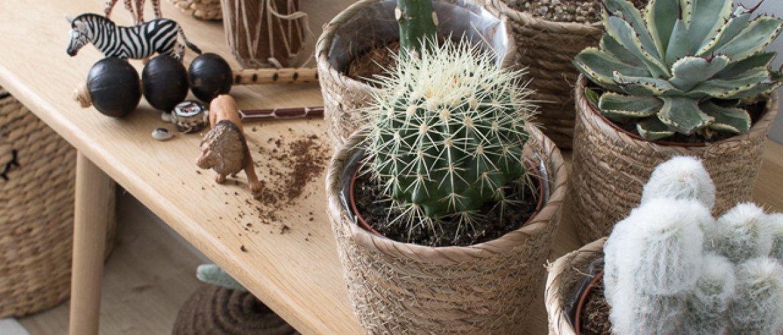 Upeat kaktukset-thumbnail