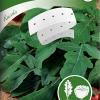 Salaattirukola-thumbnail