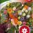 Mehiläiskukkiaseos 'Nelson mixture'-thumbnail