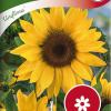 Sunflower 'Uniflorus'-thumbnail