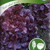 Lettuce 'Red Salad Bowl'-thumbnail