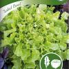 Tammenlehtisalaatti 'Salad Bowl'-thumbnail