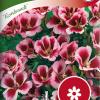 Clarkia amoena 'Rembrandt'-thumbnail