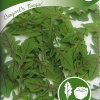 Wild rucola 'Dragon's Tongue'-thumbnail