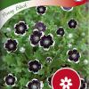 Nemophila menziesii 'Penny Black'-thumbnail