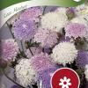 Trachymene caerulea 'Lace mixture'-thumbnail