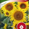 Sunflower 'Sunspot'-thumbnail