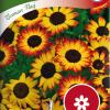 Glebionis multicolor 'German Flag'-thumbnail