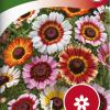 Ismelia carinata-thumbnail