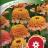 Isotsinnia 'Zinderella Peach'-thumbnail